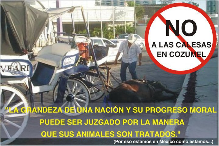 Cozumel: ban drawn carriages