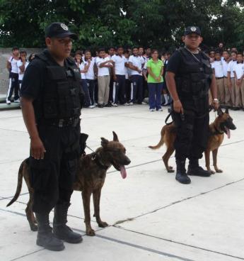 cozumel police dogs