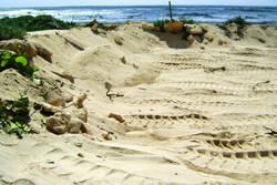 Stolen sand dunes
